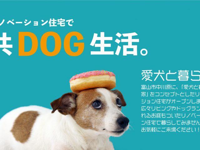 富山市中川原 フルリノベーション物件のサムネイル画像